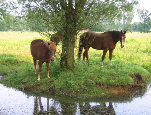 Het sportpaard in de groepsstal